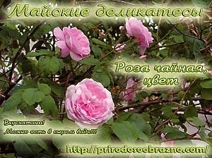 Роза чайная